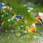KingfishersTaipei_ROW15348508322_1366x768